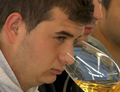 Vins i olis a Gandesa